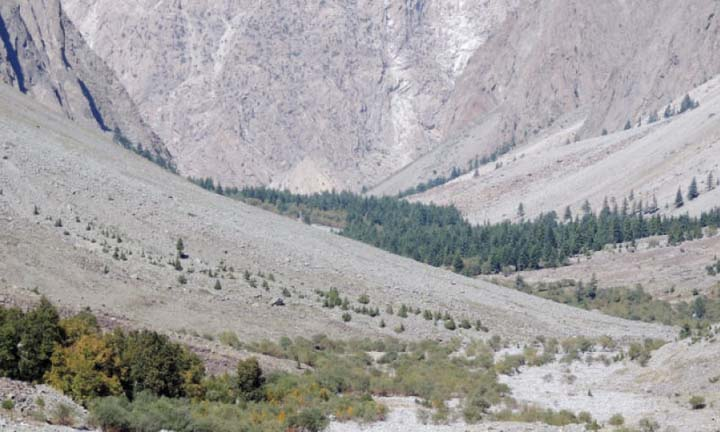 Many plant species disappearing in Chitral