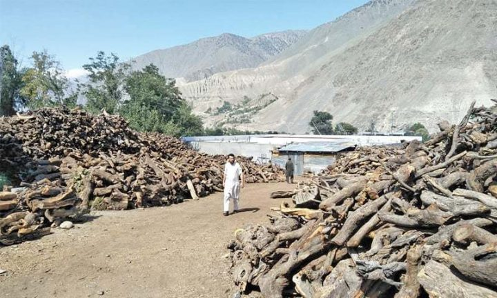 Chitral's forest a 'windfall' for timber mafia