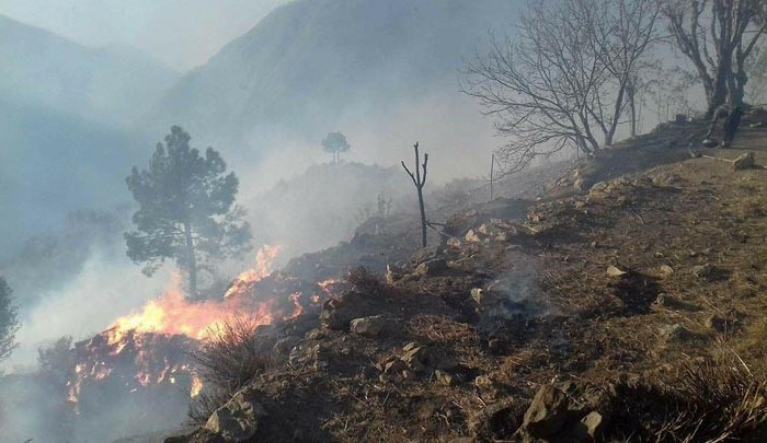 No mention of Chitral's forest fires in govt report