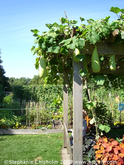 A Garden created by Children!!  So sit under the Giant Squash Terrace!!  It's Fun