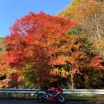 グリーンふるさとラインで出会った紅葉シーンwith CBR650R