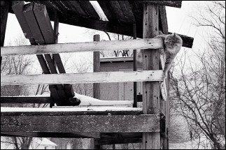 My cat, Simba, climbing on the wooden fort my father built in the back yard of my parents house. Simba was about a year old when this photograph was made in 1995.