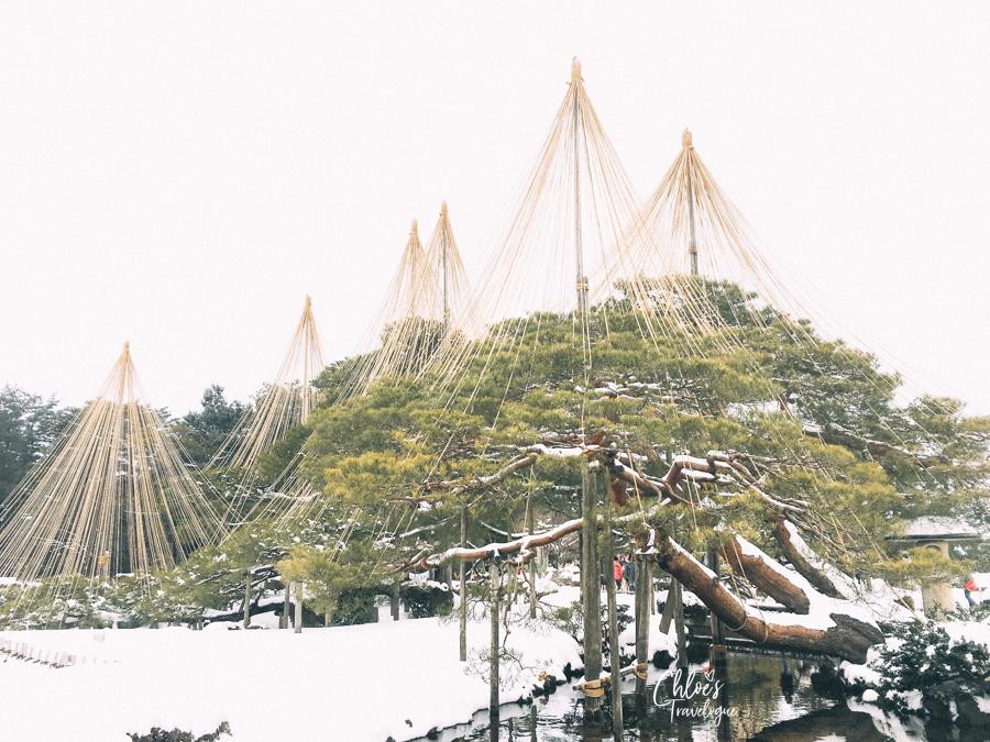 Kanazawa Winter Itinerary | View Kanazawa's iconic winter sight (snow-covered pine trees decorated with yukizuri) in Kenrokuen Garden, one of the three most beautiful Japanese gardens. #Kanazawa #Japan #winterinjapan #Kenrokuen #KanazawaGarden #JapaneseGarden | CHLOESTravelogue.com