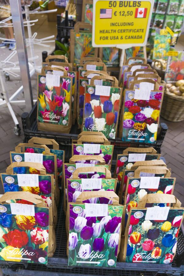 Amsterdam Itinerary Day 1 (Bucket List) | Shop Tulips at Bloemenmarket - Amsterdam's floating flower market | #Amsterdam #Holland #AmsterdamItinerary #AmsterdamThingstoDo #AmsterdamBucketList #Bloemenmarket #Tulip #iAmsterdam