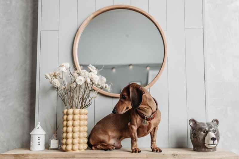 wood animal house dog