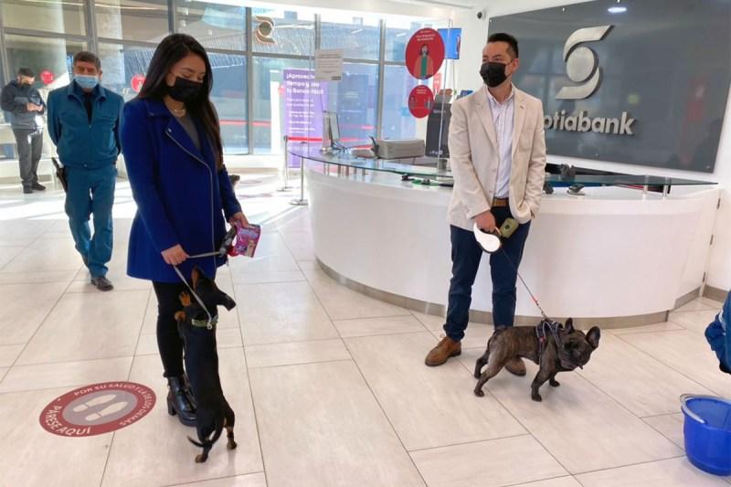 Sucursales pet friendly de Scotiabank Chile