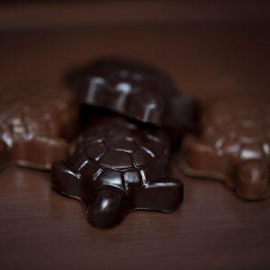 Baby Turtles  (Package of 2)