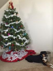 Christmas 2014 in Texas