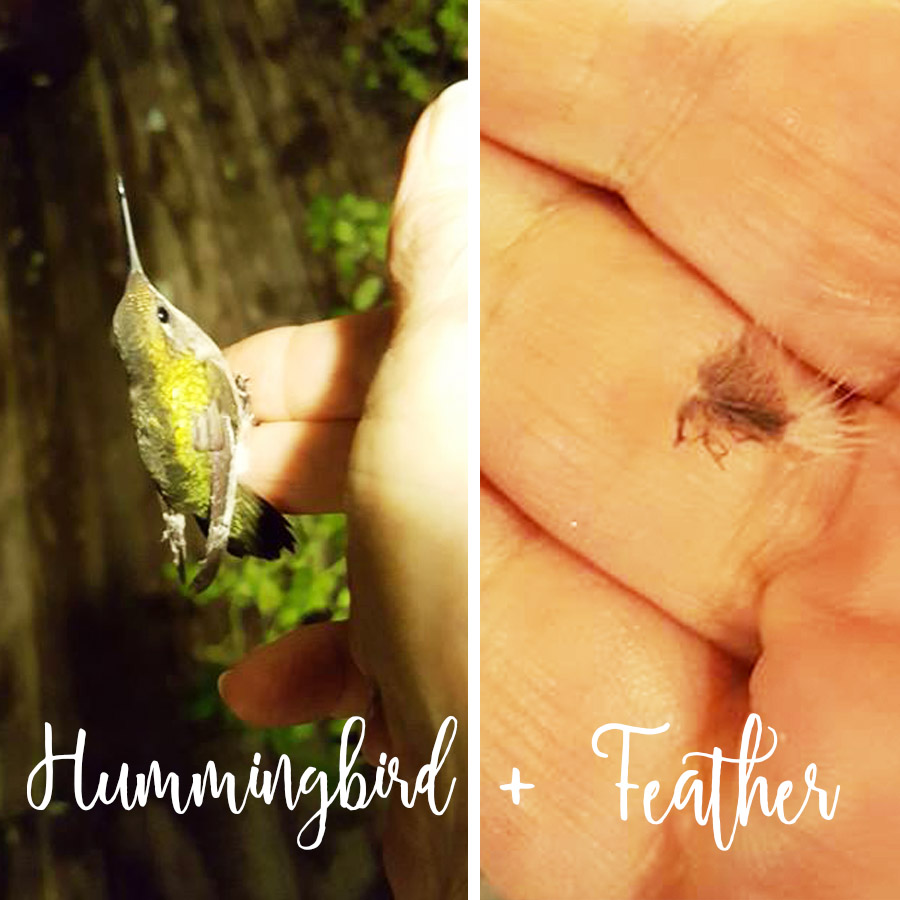 Hummingbird and Feather held by hand