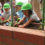 幼稚園の畑
