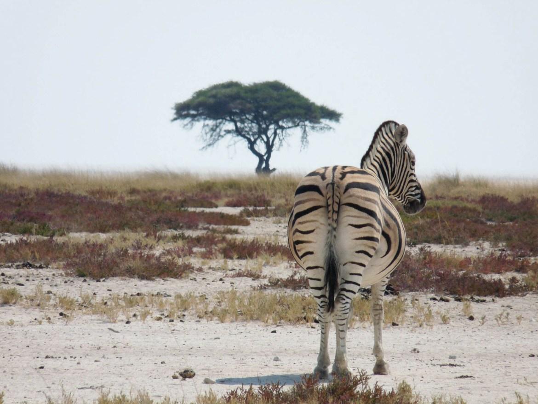namibia ferngeweht etosha