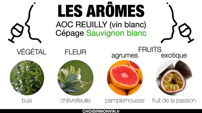 Reuilly vin : les arômes du sauvignon