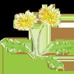 草花と昆虫 水彩風 イラスト素材
