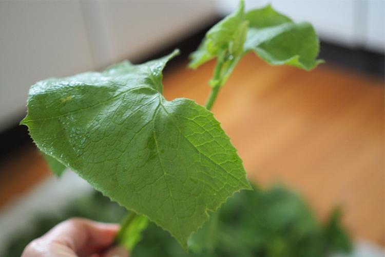 ボンナ(山菜)のレシピ