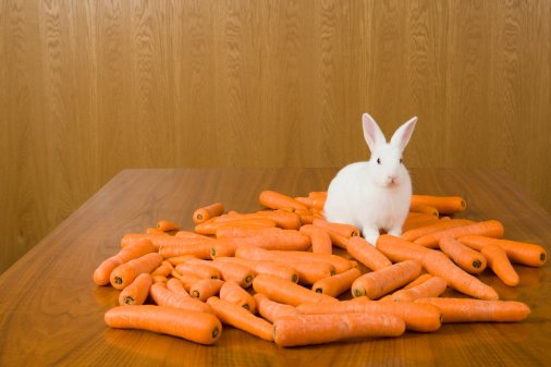 I think this rabbit is a powerful metaphor.