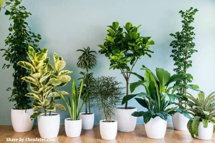 Cây xanh trong nhà lọc không khí tốt nhất