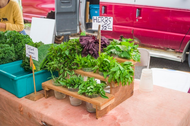 08 - 20170809.Rochester-MN-Downtown-Farmers-MarketResized-12.jpg