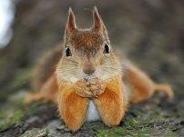 Let's help those squirrels
