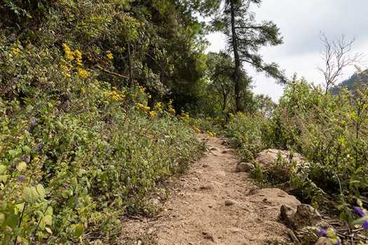 Wildflowers line the horse trail from Macheros to see monarch butterflies in the State of Michoacán.