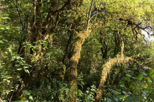 Moss-covered trees line the horse trail in the State of Michoacán.