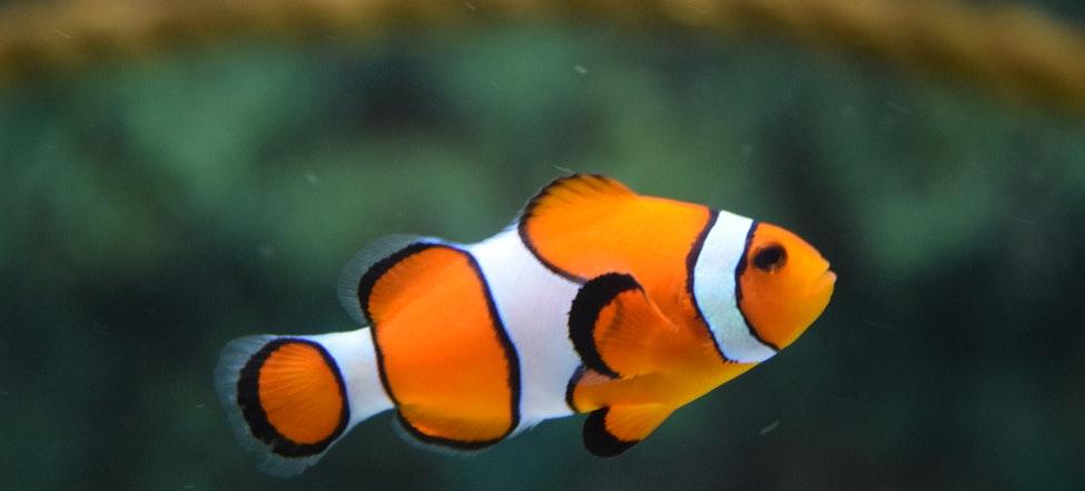 Best Fish Tanks