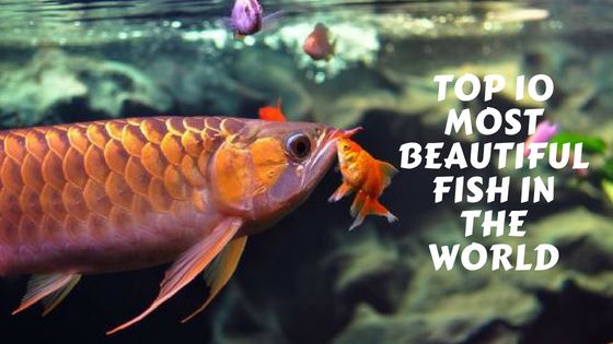 Top 10 Most Beautiful Fish in The World