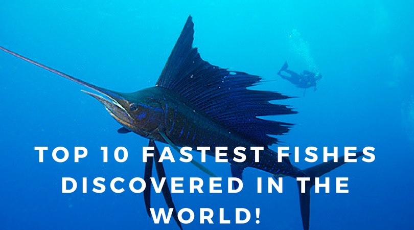 Top 10 fastest fish in the world