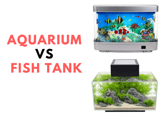 Aquarium Vs Fish Tank