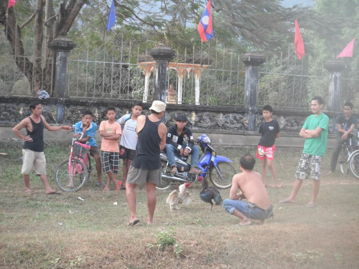 Cock fight in Vang Vieng, Laos.