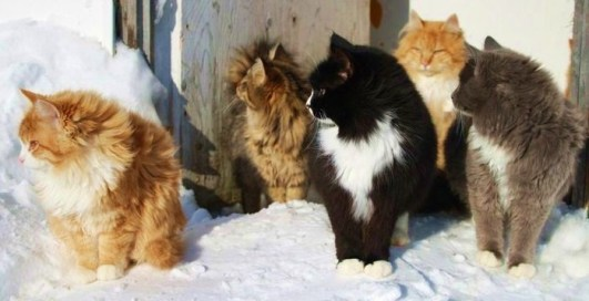 pops-cats-2