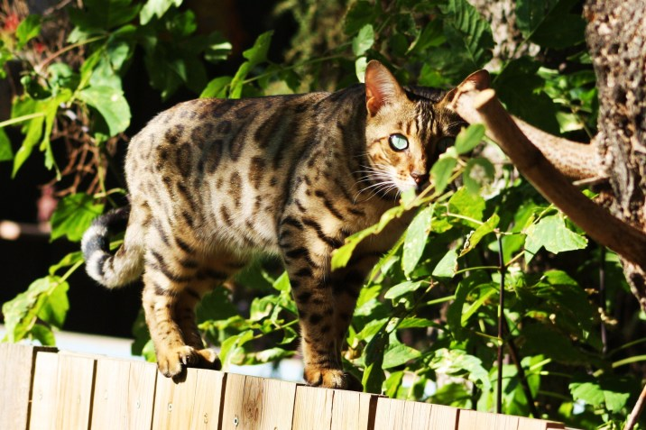 the-hunter-our-neighbours-cat