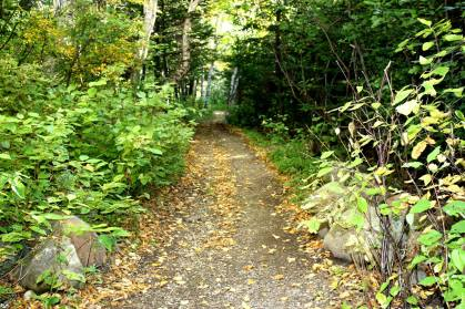 Wee care nature trail, Stephenville NL