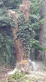 Chouette jardin - paysagiste création et entretien de votre jardin (53)