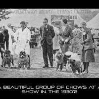 RARE PHOTOS-CHOWS IN THE RING