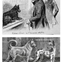 1884 FOCUS ON EDIBLE DOG OF CHINA