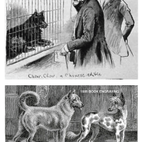 1884 FOCUS ON EDIBLE DOG OF CHINA