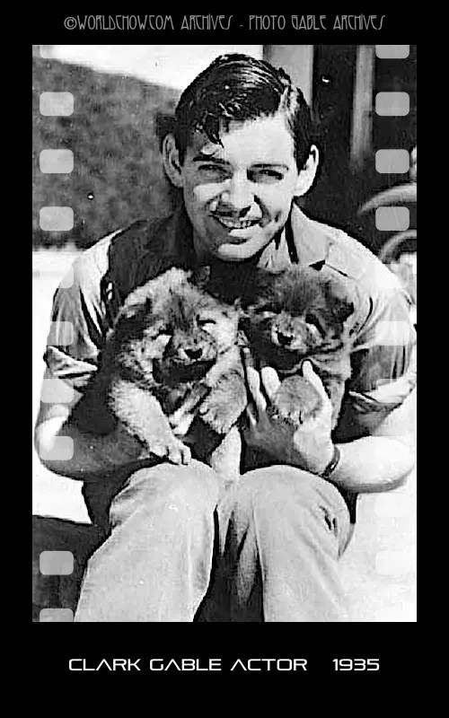 CLARK GABLE WITH CHOW PUPPIES circa 1935 (courtesy the Gable Archive)