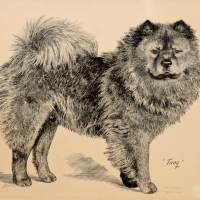 ARTICLE circa 1899-In Defense of the Chinese Dog