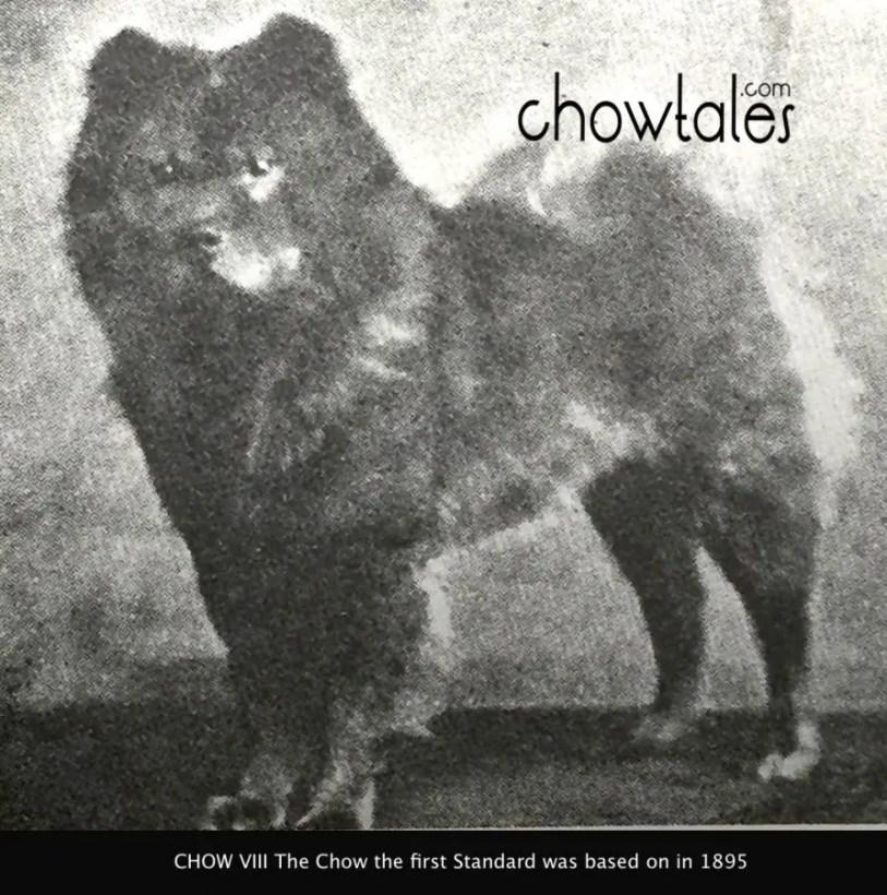 chow viii photo rare