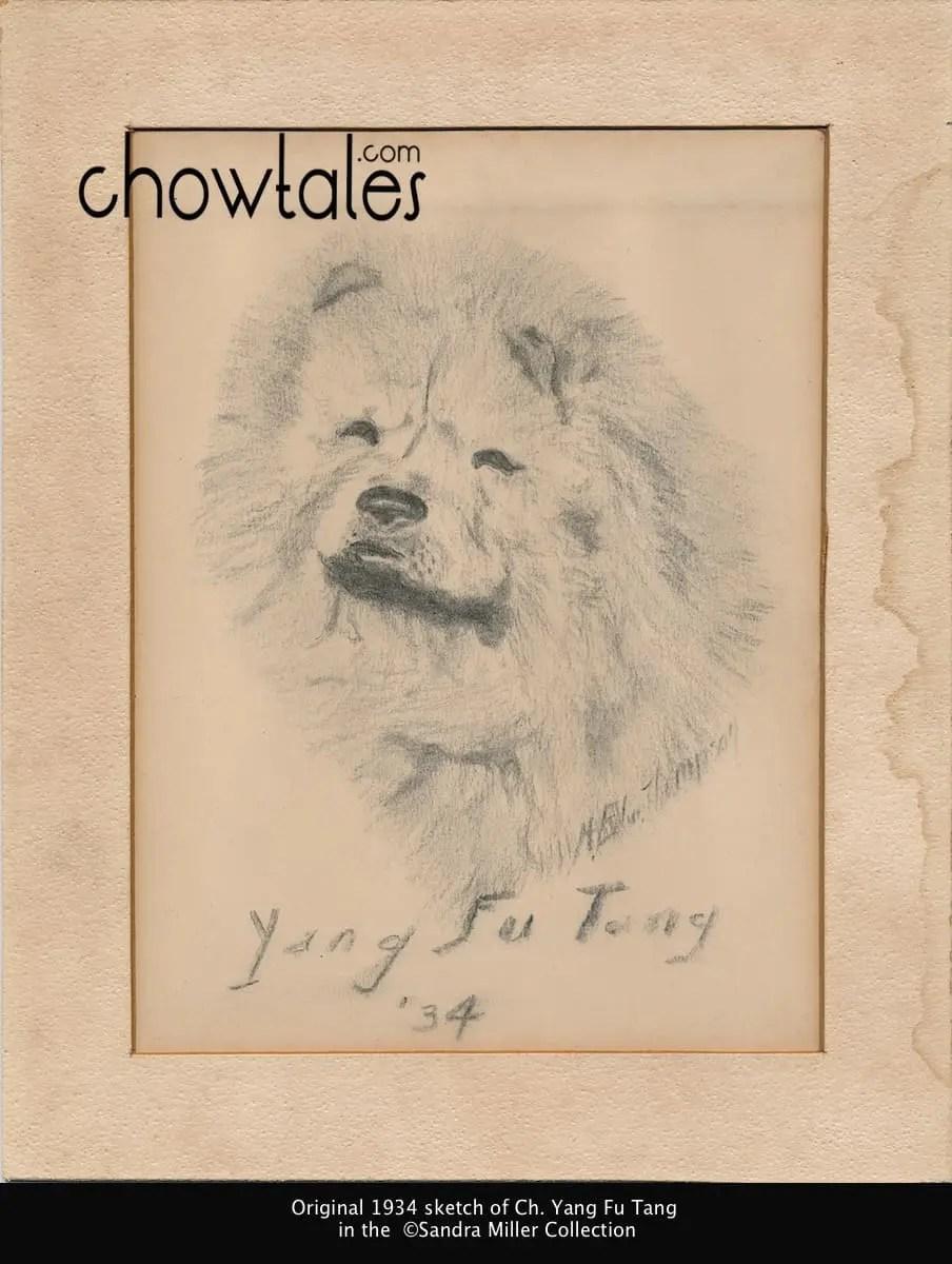 Ch. Yang Fu Tang original sketch
