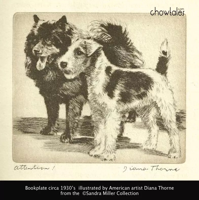 Diana Thorne 1936 chow terrier print attention screenshot Diana Thorne illustrations book 1930s