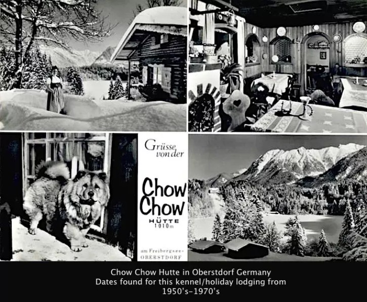 CHOW CHOW HUTTE GERMANY
