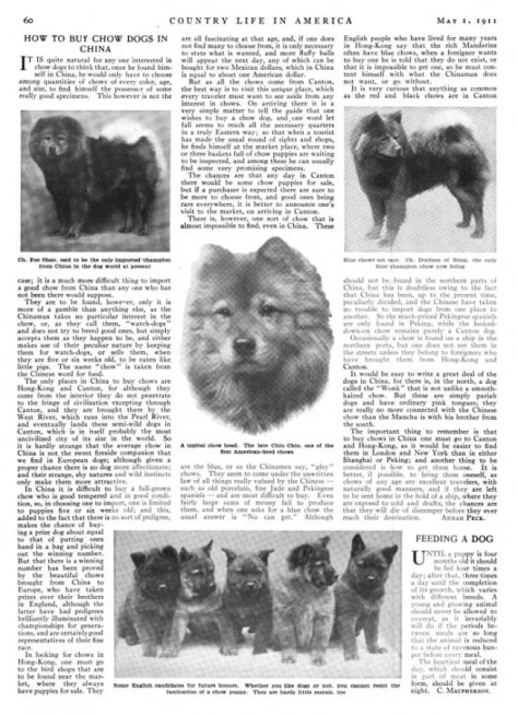 how to buy chow dogs in china country life May 1 1911