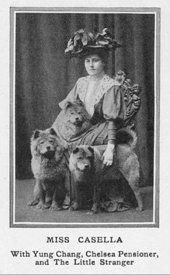 Miss Casella with her chows