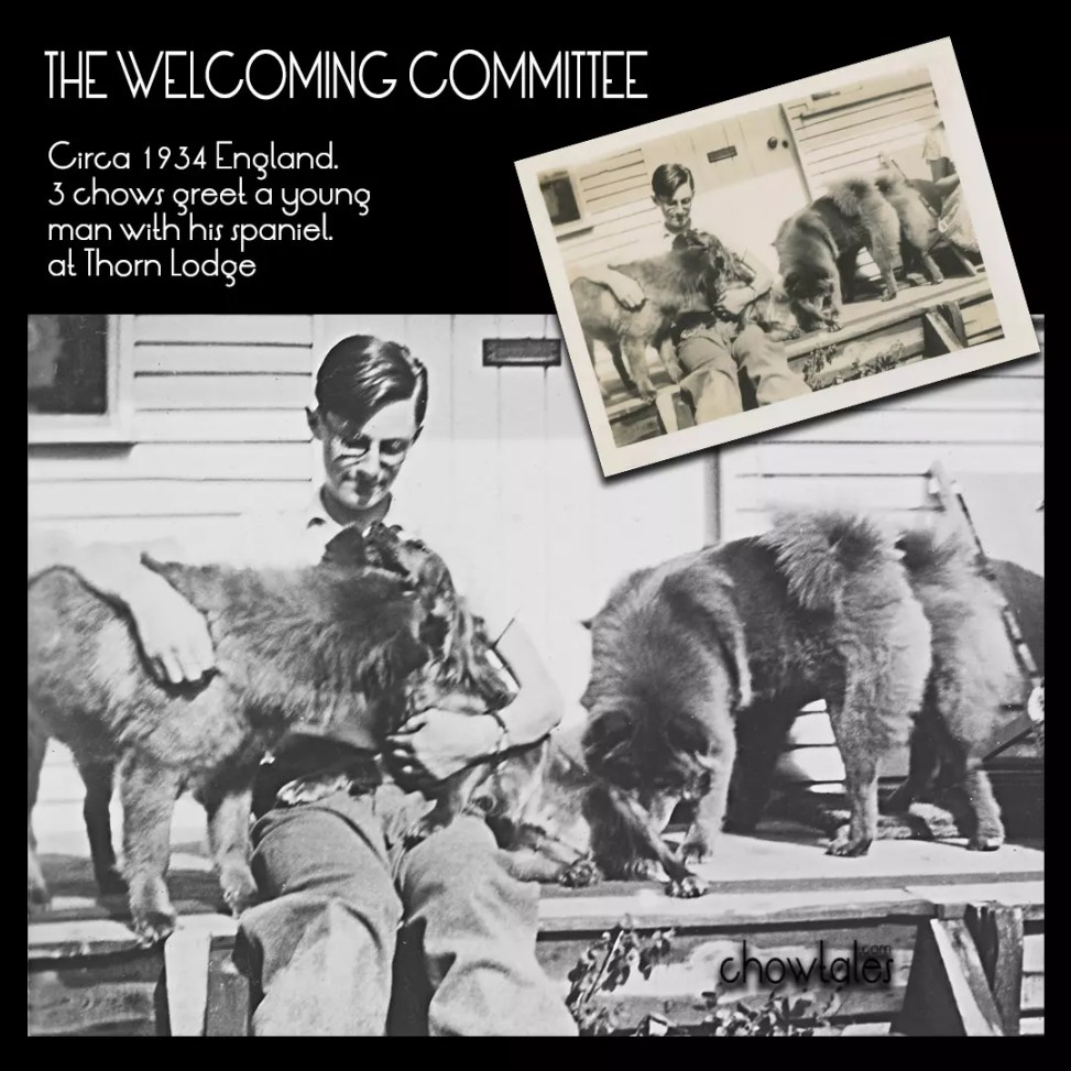 The Welcoming Committee collage