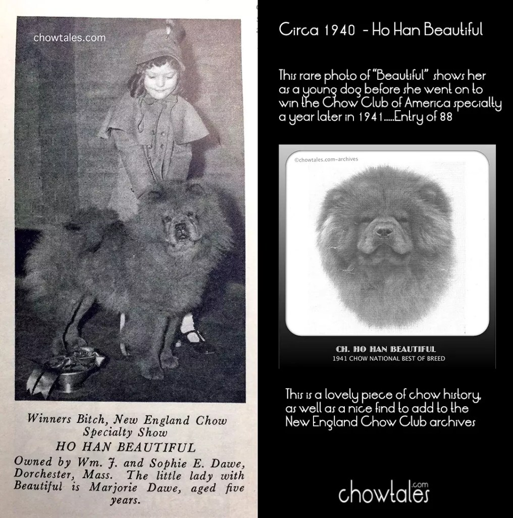 1940 ho Han beautiful COLLAGE dog news