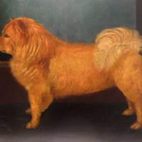 1881 PAINTING by B. Griffiths – One of the earliest depictions of a chow in England
