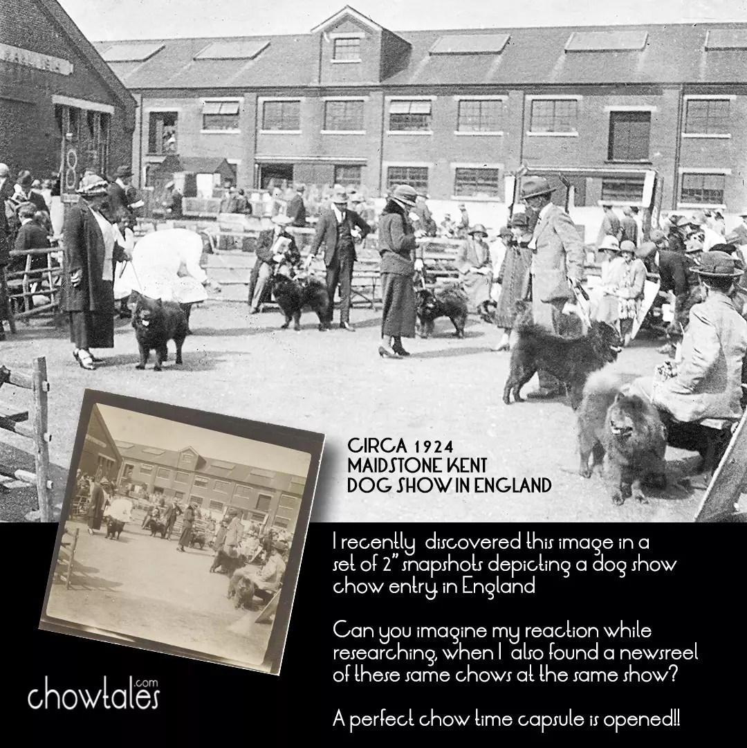1924 maidstone kent dog show paid 50 collage