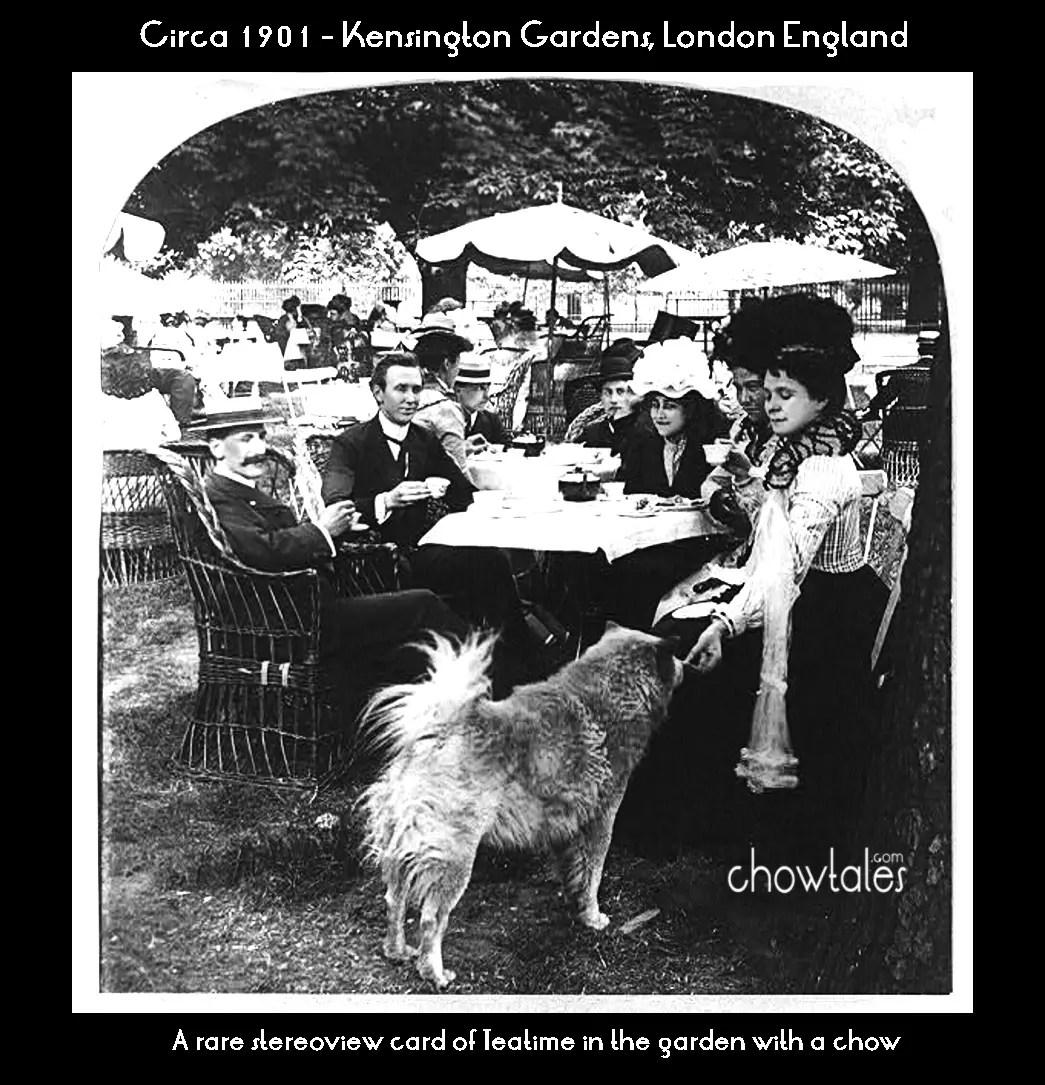1901-kensington-garden-chow-tea