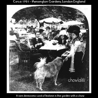 1898 ARTICLE – NY Paper reports of the new fad in London of owning Chow dogs.